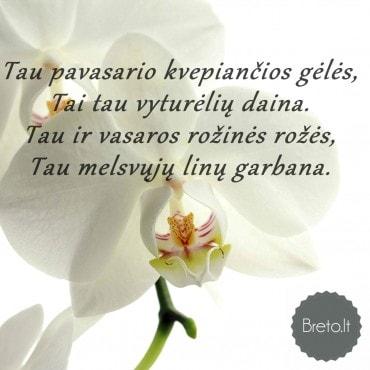 Tau pavasario kvepiančios gėlės