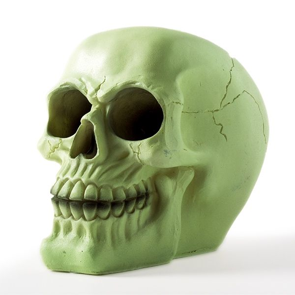 kaukolė-taupyklė