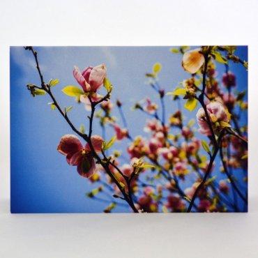 """Atvirukas """"Rožiniai pumpurai pavasarį"""""""