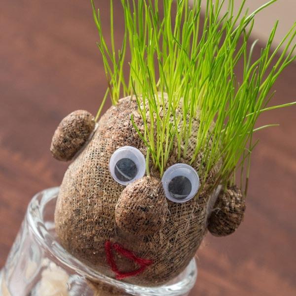 Augalas žolės galva