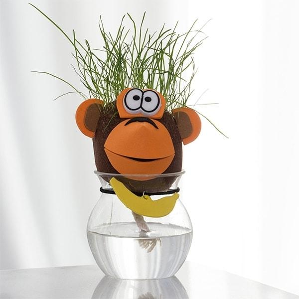 daiginamas dekoratyvinis augalas