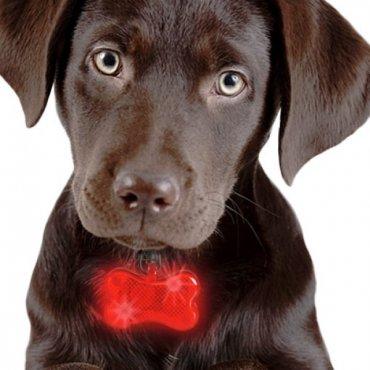 LED pakabukas šuns antkakliui