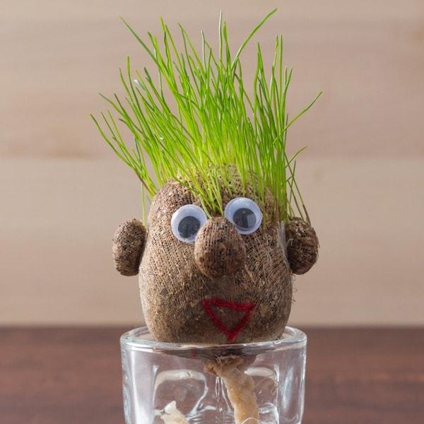 Žolės galva